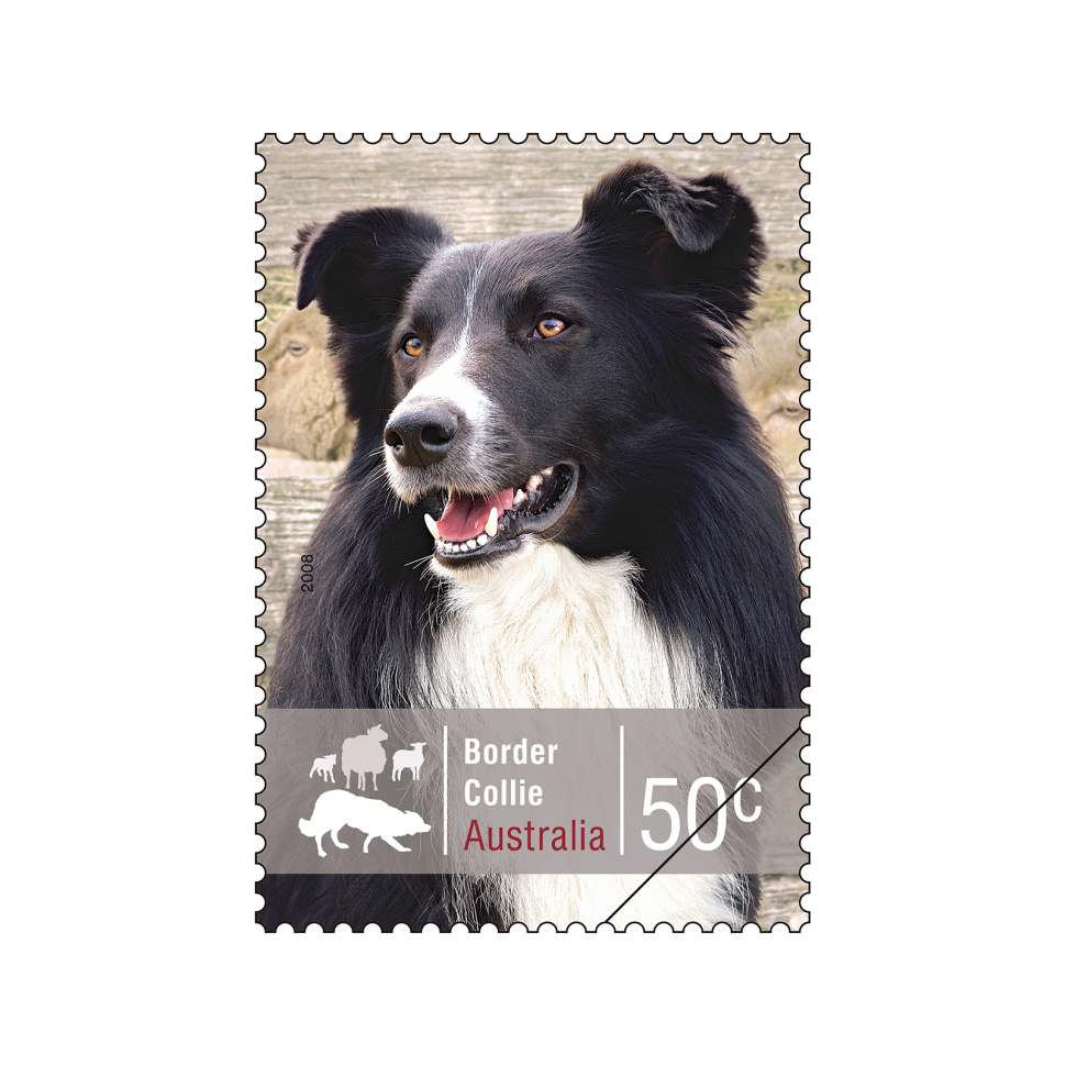 The top stamp overall as voted by the readers of the Stamp Bulletin was the Border Collie stamp from the Working Dogs stamp issue.